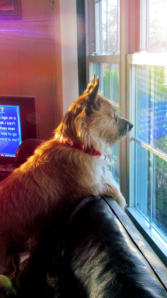 WatchingforDaddyattheWindow.3.15.12